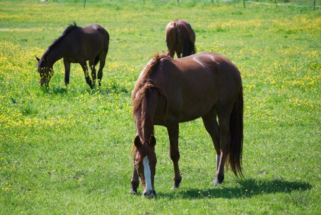 Vergiftung Pferd